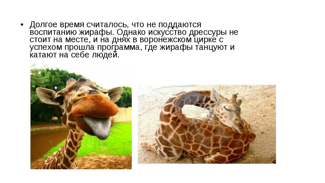Долгое время считалось, что не поддаются воспитанию жирафы. Однако искусство...