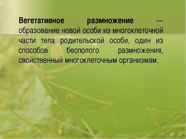 Вегетативное размножение — образование новой особи из многоклеточной части те...
