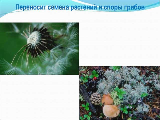 Переносит семена растений и споры грибов