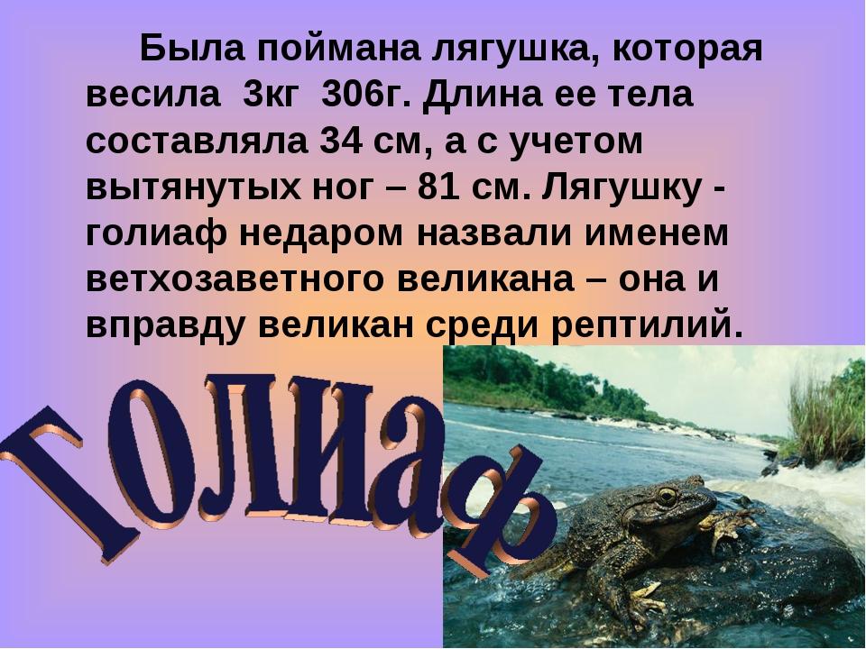 Была поймана лягушка, которая весила 3кг 306г. Длина ее тела составляла 34...