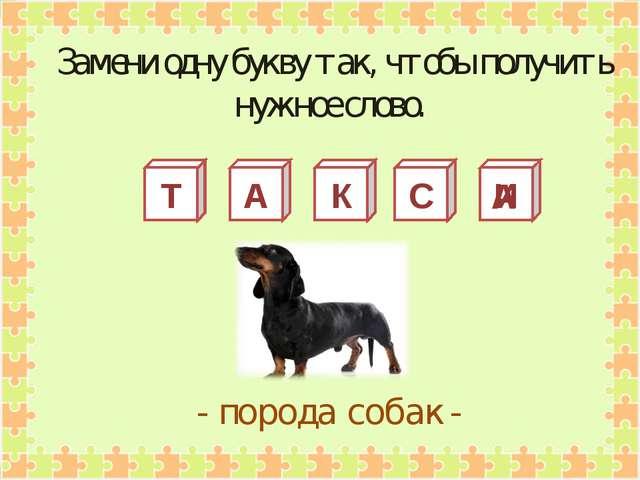 Т А К С И - порода собак - Замени одну букву так, чтобы получить нужное слово...
