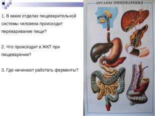 1. В каких отделах пищеварительной системы человека происходит переваривание
