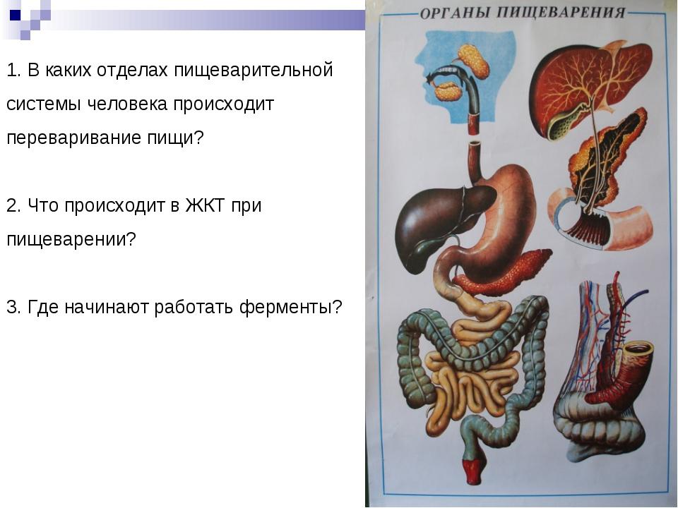 1. В каких отделах пищеварительной системы человека происходит переваривание...
