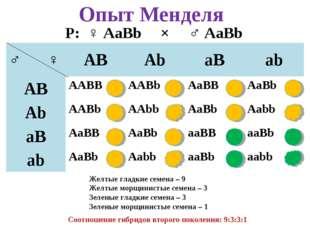Опыт Менделя Р: ♀ AaBb × ♂ AaBb Желтые гладкие семена – 9 Желтые морщинистые