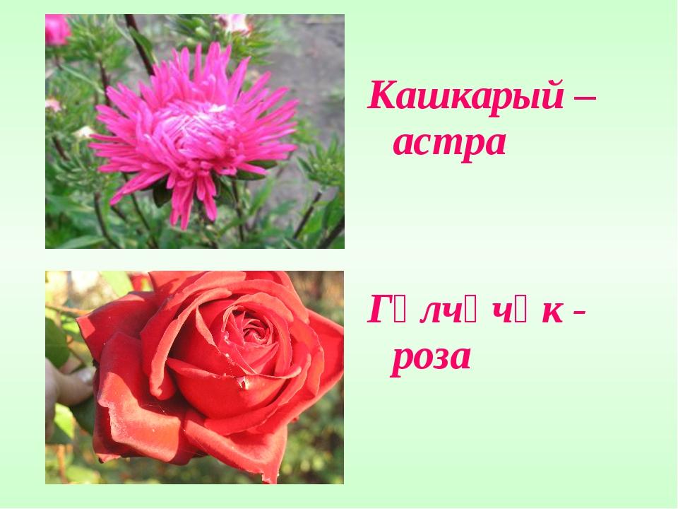 Кашкарый – астра Гөлчәчәк - роза