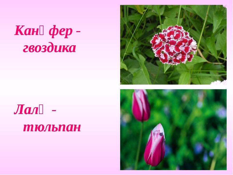 Канәфер - гвоздика Лалә - тюльпан