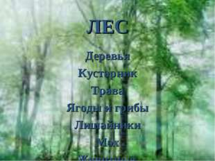 ЛЕС Деревья Кустарник Трава Ягоды и грибы Лишайники Мох Животные