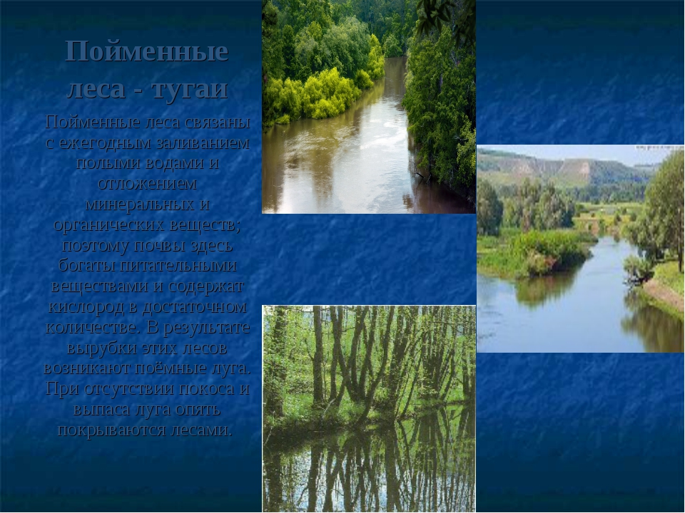 Пойменные леса - тугаи Пойменные леса связаны с ежегодным заливанием полыми в...