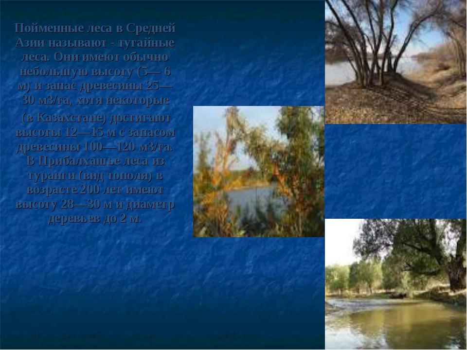 Пойменные леса в Средней Азии называют - тугайные леса. Они имеют обычно небо...
