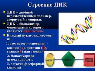 Строение ДНК ДНК – двойной неразветвленный полимер, свернутый в спираль ДНК -