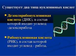 Существует два типа нуклеиновых кислот Дезоксирибонуклеиновая кислота (ДНК),