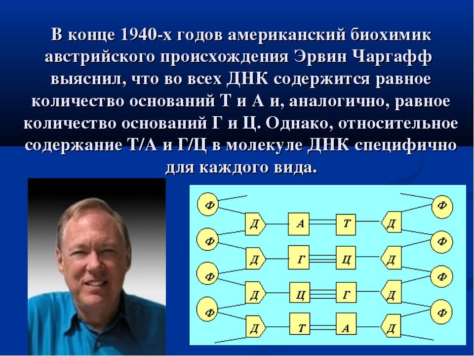 В конце 1940-х годов американский биохимик австрийского происхождения Эрвин Ч...