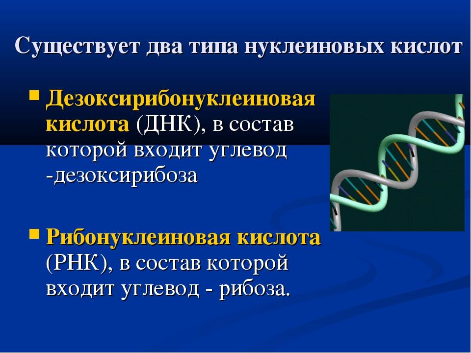 Существует два типа нуклеиновых кислот Дезоксирибонуклеиновая кислота (ДНК),...
