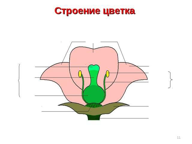 Строение цветка *