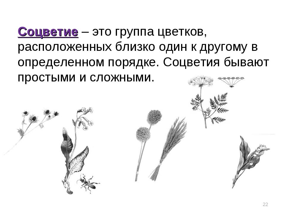 Соцветие – это группа цветков, расположенных близко один к другому в определе...