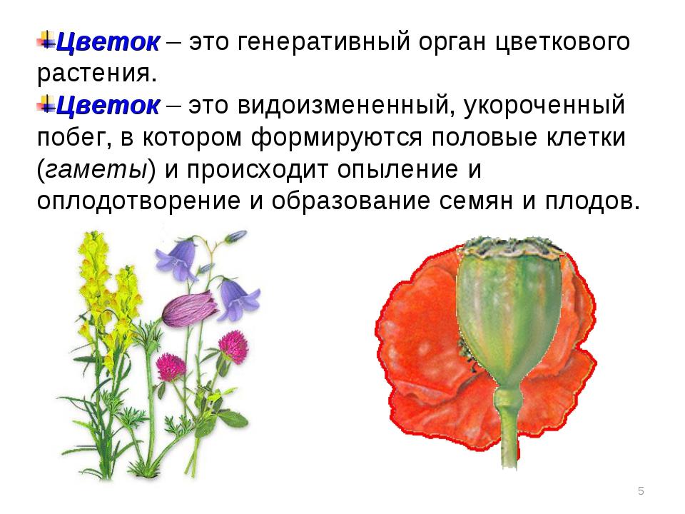 Цветок – это генеративный орган цветкового растения. Цветок – это видоизменен...