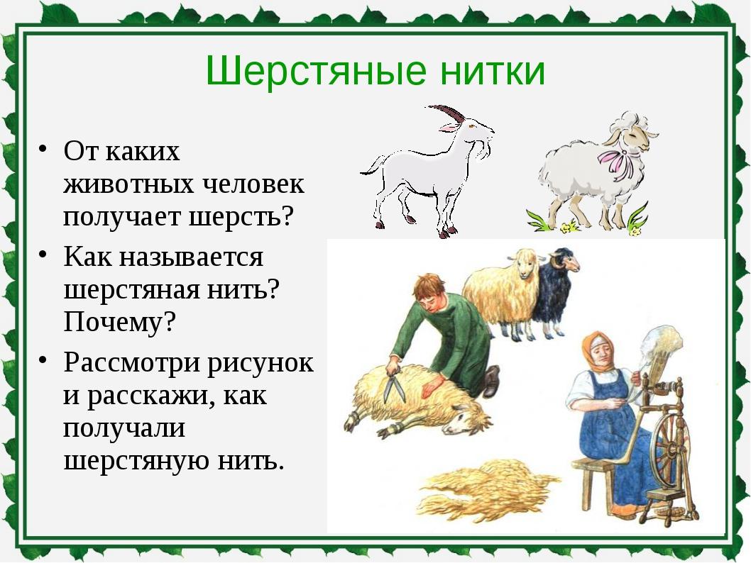 Шерстяные нитки От каких животных человек получает шерсть? Как называется шер...