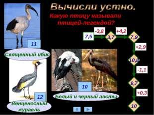 Какую птицу называли птицей-легендой? Венценосный журавль 7,5 -3,8 +4,2 -1,1