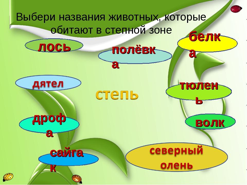Выбери названия животных, которые обитают в степной зоне белка лось полёвка с...