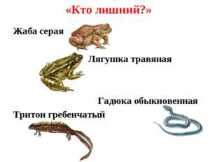 «Кто лишний?» Жаба серая Лягушка травяная Гадюка обыкновенная Тритон гребенча