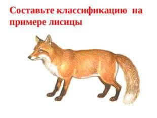 Составьте классификацию на примере лисицы