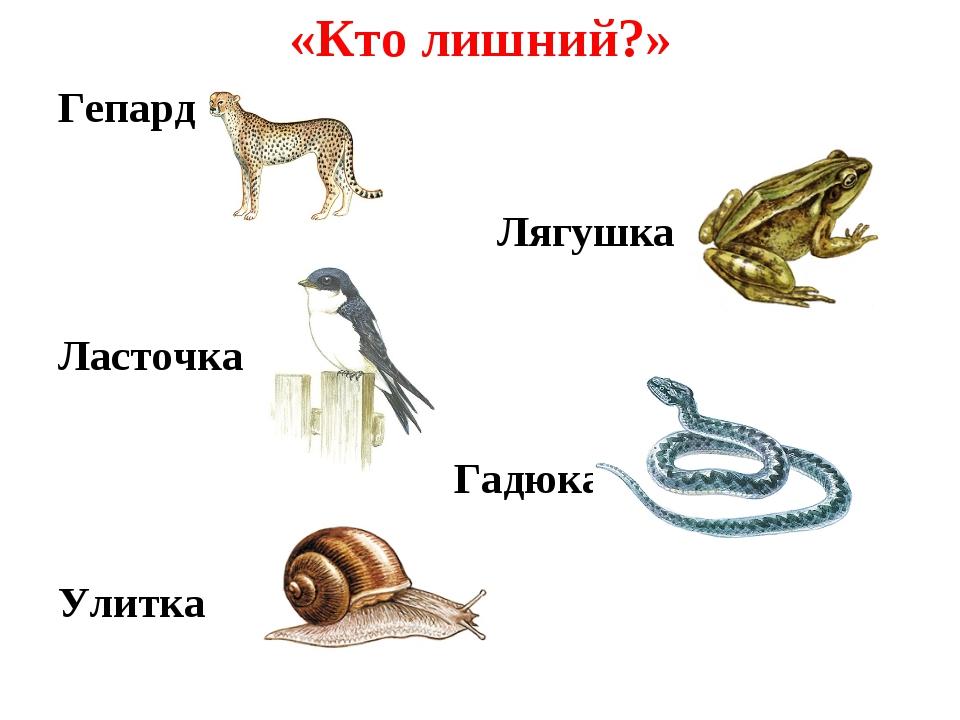 «Кто лишний?» Гепард Лягушка Ласточка Гадюка Улитка