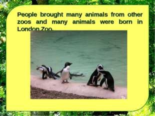 People brought many animals from other zoos and many animals were born in Lon