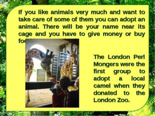 If you like animals very much and want to take care of some of them you can a