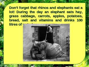 Don't forget that rhinos and elephants eat a lot! During the day an elephant