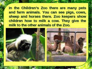 In the Children's Zoo there are many pets and farm animals. You can see pigs,