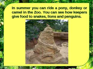 In summer you can ride a pony, donkey or camel in the Zoo. You can see how ke