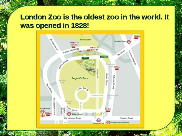 London Zoo is the oldest zoo in the world. It was opened in 1828!
