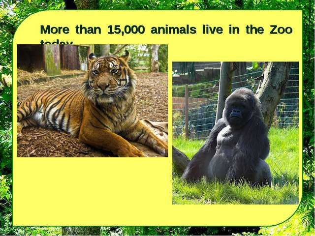 More than 15,000 animals live in the Zoo today.