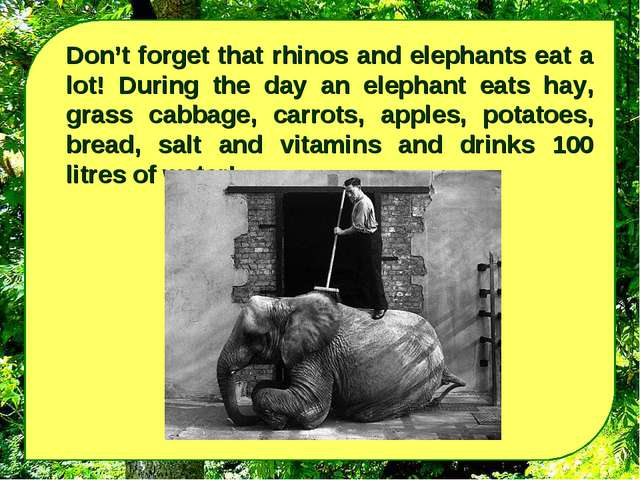 Don't forget that rhinos and elephants eat a lot! During the day an elephant...