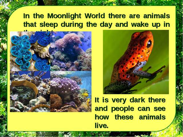 In the Moonlight World there are animals that sleep during the day and wake u...