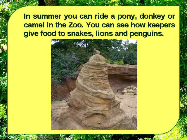 In summer you can ride a pony, donkey or camel in the Zoo. You can see how ke...