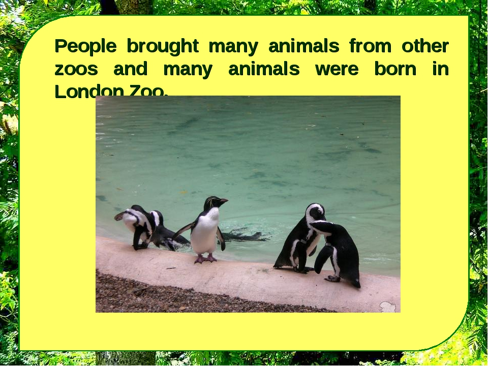People brought many animals from other zoos and many animals were born in Lon...