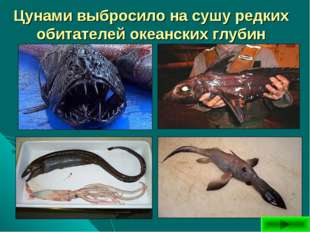Цунами выбросило на сушу редких обитателей океанских глубин