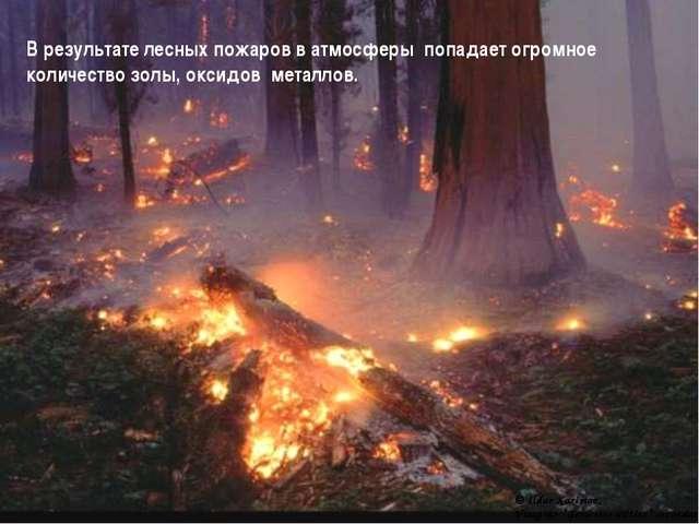 В результате лесных пожаров в атмосферы попадает огромное количество золы, ок...
