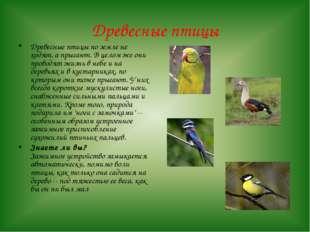 Древесные птицы Древесные птицы по земле не ходят, а прыгают. В целом же они