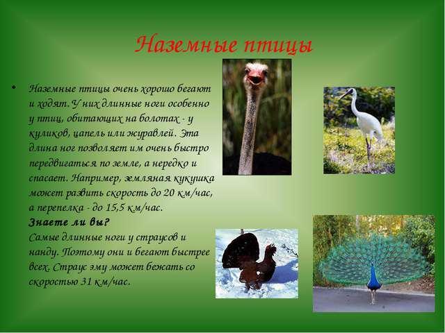 Наземные птицы Наземные птицы очень хорошо бегают и ходят. У них длинные ноги...