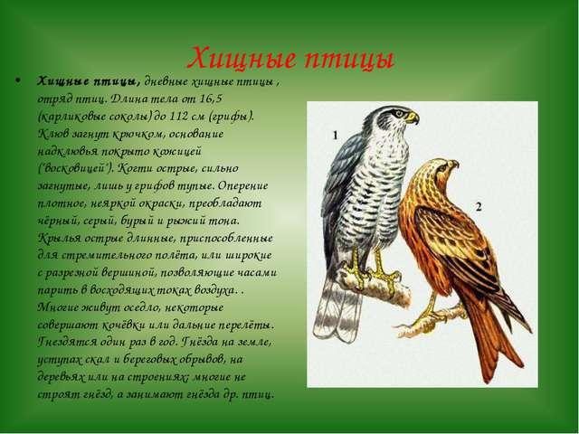 Хищные птицы Хищные птицы, дневные хищные птицы , отряд птиц. Длина тела от 1...