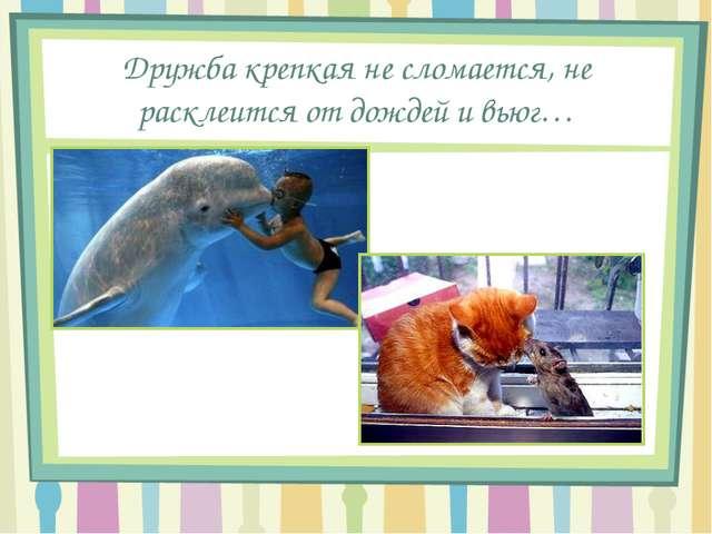 Дружба крепкая не сломается, не расклеится от дождей и вьюг…