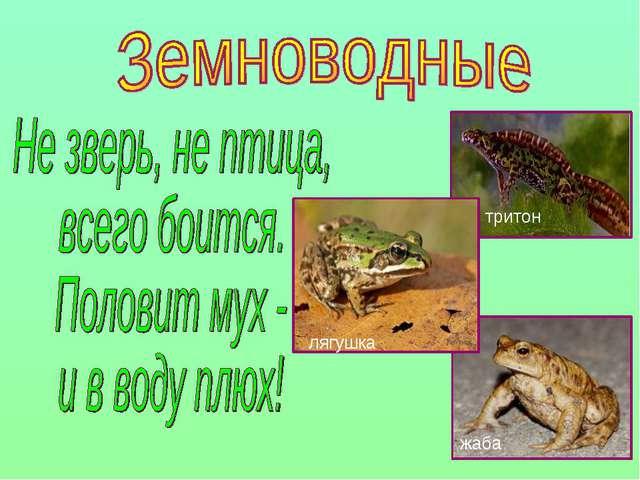 лягушка жаба тритон