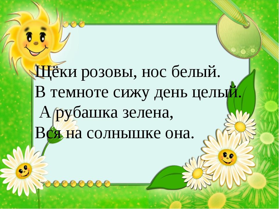 Щёки розовы, нос белый. В темноте сижу день целый. А рубашка зелена, Вся на с...