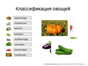 Классификация овощей тыквенные капуста клубнеплоды корнеплоды луковичные лист