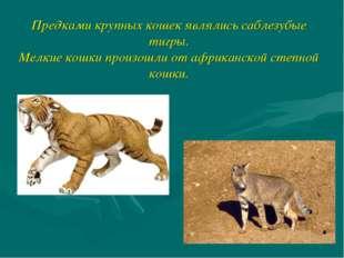 Предками крупных кошек являлись саблезубые тигры. Мелкие кошки произошли от а