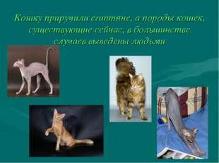 Кошку приручили египтяне, а породы кошек, существующие сейчас, в большинстве