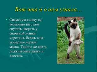 Вот что я о нем узнала… Сиамскую кошку не возможно ни с кем спутать, шерсть у