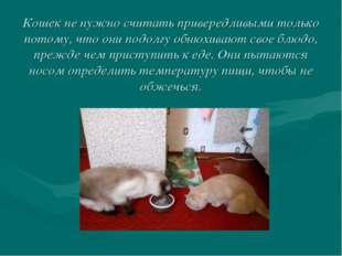 Кошек не нужно считать привередливыми только потому, что они подолгу обнюхива